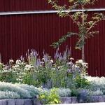 wild-garden-inspiration-naturalness9.jpg