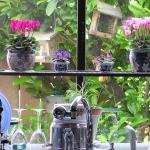 window-shelves-ideas-for-plants3-3.jpg