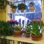 window-shelves-ideas-for-plants4-3.jpg