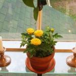 window-shelves-ideas-for-plants4-5.jpg