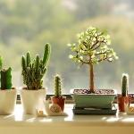 windowsill-decorating-ideas-plants1.jpg