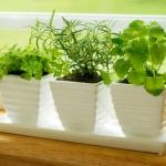 windowsill-decorating-ideas-plants6.jpg
