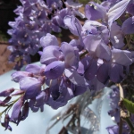 wisteria-branches-table-setting-breakfast3-9.jpg
