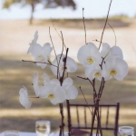 wonderful-orchids-ideas2-16.jpg