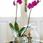 wonderful-orchids-ideas2-17.jpg