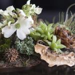 wonderful-orchids-ideas2-6.jpg