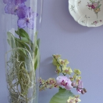 wonderful-orchids-ideas2-7.jpg