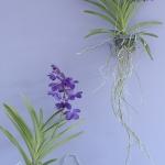 wonderful-orchids-ideas2-9.jpg