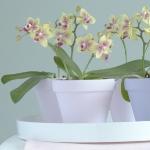 wonderful-orchids-ideas3-11.jpg