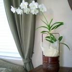 wonderful-orchids-ideas3-12.jpg