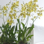 wonderful-orchids-ideas3-4.jpg