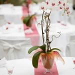 wonderful-orchids-ideas3-6.jpg
