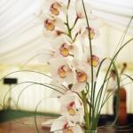 wonderful-orchids-ideas3-13.jpg