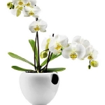 wonderful-orchids-ideas3-14.jpg
