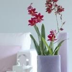 wonderful-orchids-ideas3-22.jpg