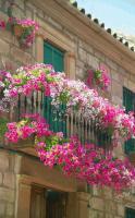 balcon-flowers1