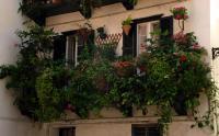 balcon-flowers13