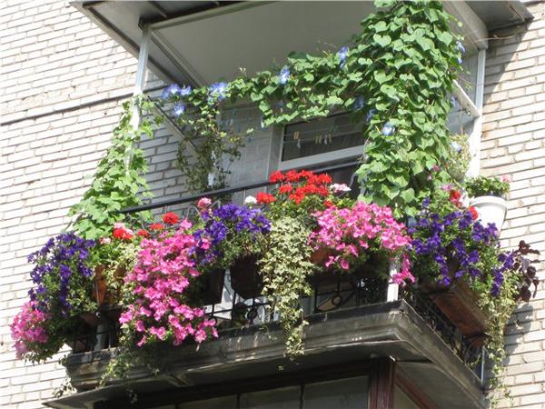 balcon-flowers3