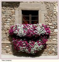 balcon-flowers6