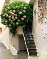 balcon-flowers8