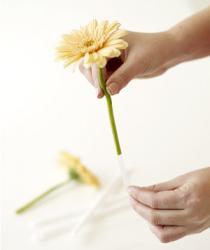 combo-flower4-3