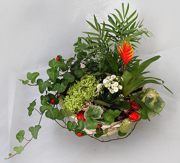 Из маленьких комнатных растений