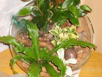 combo-plant10