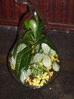 combo-plant15