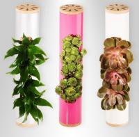combo-plant22