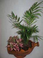 combo-plant3