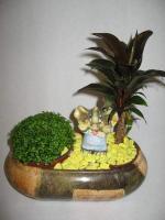 combo-plant4