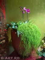 combo-plant6