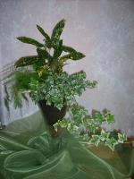 combo-plant9