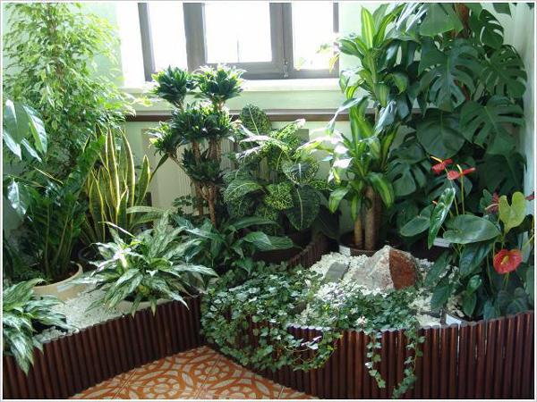 plant-composition1