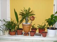 plant-composition19