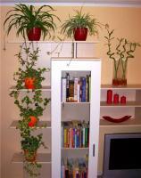 plant-composition2
