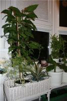 plant-composition20
