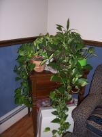 plant-composition21