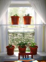 plant-composition22