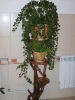 plant-composition23