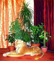 plant-composition24