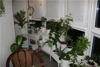 plant-composition26
