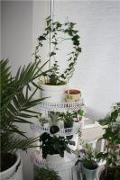 plant-composition3