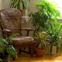 plant-composition33