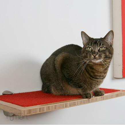 wall-shelves-and-cat