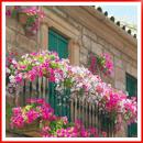 balcon-flowers02