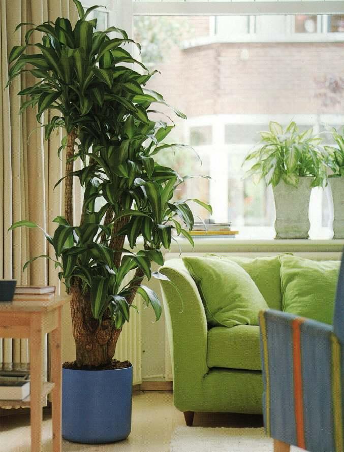 plant-best-single1