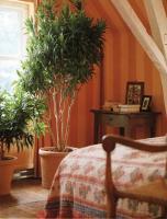 plant-best-single13