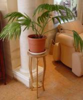 plant-best-single17