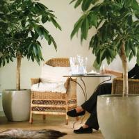 plant-best-single2